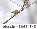 センダイムシクイ Eastern crowned willow warbler 30684545