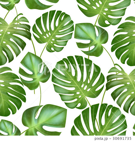 vector seamless tropical leaves pattern strongのイラスト素材