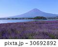 富士山 河口湖 ラベンダーの写真 30692892