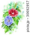 朝顔 花 植物のイラスト 30692957