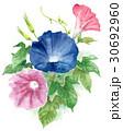 朝顔 花 植物のイラスト 30692960