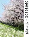 桜花吹雪 30693960