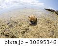 ヤドカリの浜 30695346