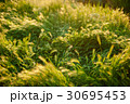 抽象的 自然 春の写真 30695453