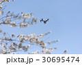 ドローンと青空と桜 30695474