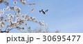 ドローンと青空と桜 30695477