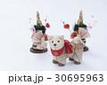 戌 犬 門松の写真 30695963