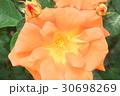 バラの花のクローズアップ 30698269