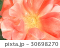 バラの花のクローズアップ 30698270