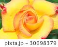 バラの花のクローズアップ 30698379