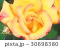 バラの花のクローズアップ 30698380