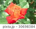 バラの花のクローズアップ 30698384