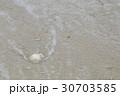 打ち寄せられた珊瑚 30703585
