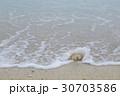 打ち寄せられた珊瑚 30703586