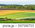 朝 畑 田園風景の写真 30708755