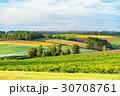 朝 畑 田園風景の写真 30708761