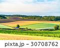 朝 畑 田園風景の写真 30708762