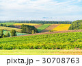 朝 畑 田園風景の写真 30708763