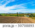 田園風景 美瑛の丘 畑の写真 30708893