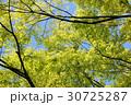 森の木々 30725287