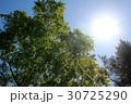太陽と木々 30725290