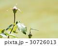 薔薇の花とトンボ 30726013