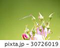 薔薇の花とトンボ 30726019