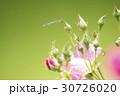 薔薇の花とトンボ 30726020