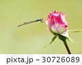 薔薇とトンボ 30726089