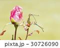 薔薇とトンボ 30726090