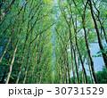 春 植物 自然の写真 30731529