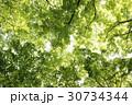 枝 木 緑の写真 30734344
