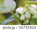 ブルーベリー 花 フルーツの写真 30735810