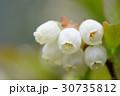 ブルーベリー 花 フルーツの写真 30735812