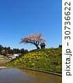 桜 名木 田村市の写真 30736622