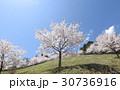 桜と青空 30736916