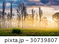 trees on meadow in mountains at foggy sunrise 30739807