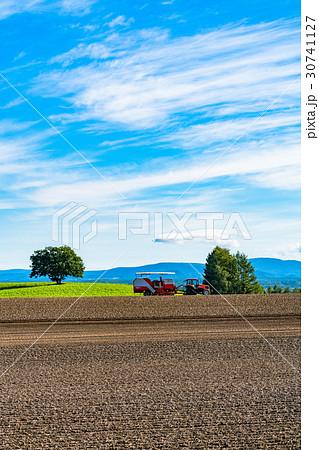《北海道》美瑛の農業 30741127