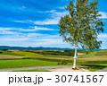 《北海道》美瑛・新栄の丘展望公園 30741567