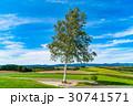 《北海道》美瑛・新栄の丘展望公園 30741571