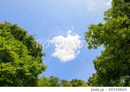 新緑の木々と青空と雲 30749604