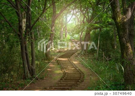森の中のハイキングトレイル 30749640