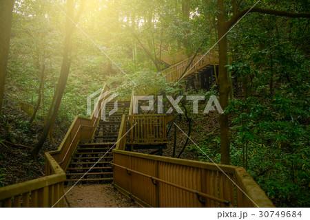 森の中のハイキングトレイル 30749684