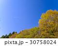 新緑 樹木 晴れの写真 30758024