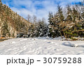 spruce forest on snowy meadow in mountains 30759288