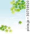 新緑 青もみじ 流水のイラスト 30759920
