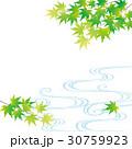 新緑 青もみじ 流水のイラスト 30759923
