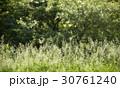 春 植物 自然の写真 30761240