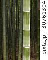 木 竹 植物の写真 30761304