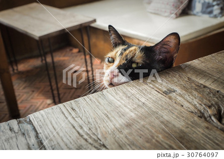 Cat sitting on a chair and waiting for some foodの写真素材 [30764097] - PIXTA